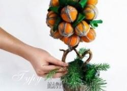 Ксения 68 - Мандариновое дерево