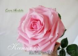 Ксения 68 - Маленькие тонкости большой розы.(ХФ)