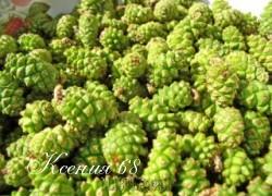 Ксения 68 - Варенье из молодых сосновых шишек
