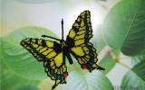 Ксения 68 - Бисер. Бабочка махаон или мозаичное плетение