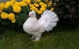 Ксения 68 - Королевский голубь из пластиковых бутылок. Мастер класс