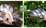 Ксения 68 - Ёжик из яичных лотков.МК