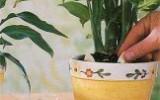 Ксения 68 - Натуральная защита и питание комнатных растений