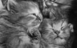 Ксения 68 - Невероятно фотореалистичные карандашные рисунки котов