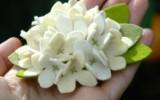 Ксения 68 - Брошь с цветами гортензии из фетра.МК