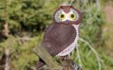 Ксения 68 - Птицы из фетра. Схемы