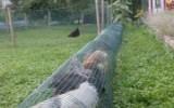 Ксения 68 - Туннель для куриц из сетки