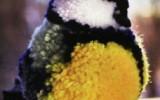Ксения 68 - Синичка из помпона