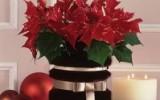 Ксения 68 - Меховые вазы для цветов.МК
