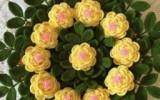 Ксения 68 - Салфетка с ирландскими розами