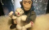 ЛюдмилаЛ - Обезьянка игрушка ручной работы - шимпанзе Джонни с львенком