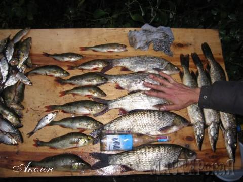 Улов с топ зоны, маленький ручей перегорожен плотиной и в этом месте ловится язь, плотва, окунь, щука, говорили что там есть и более благородная рыба но нам она не попалась