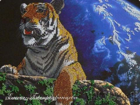 Тигр - зверь гордый и хищный, красота неоспорима, как и мощь. Но на самом деле - характер кошки, её же грация и самостийность. Просто большой и дикий кот :))