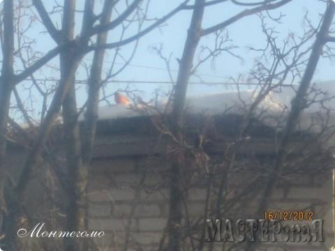 А вот кого я увидела вчера на крыше соседнего дома!!! Их там три!!! Толстые, яркие, такие новогодние!!!! СНЕГИРИ!!! Ща еще одного покажу!!!