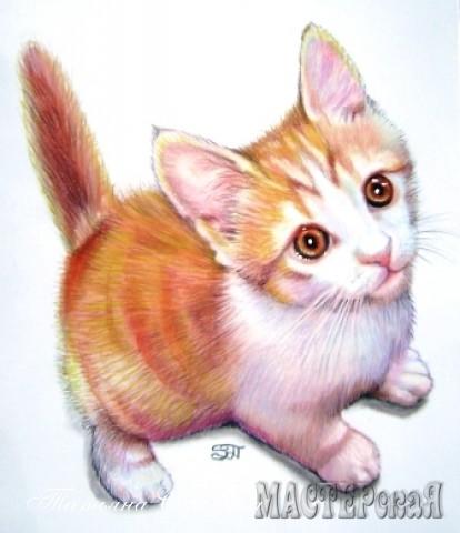 Кот, по прозвищу Сэмэн