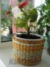 Gorodko - Новое кашпо для любимого цветка