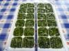 Дваспособахранениязелениназиму