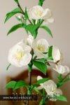 Ксения 68 - Веточка вишни. МК
