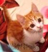 Кот,попрозвищуСэмэн