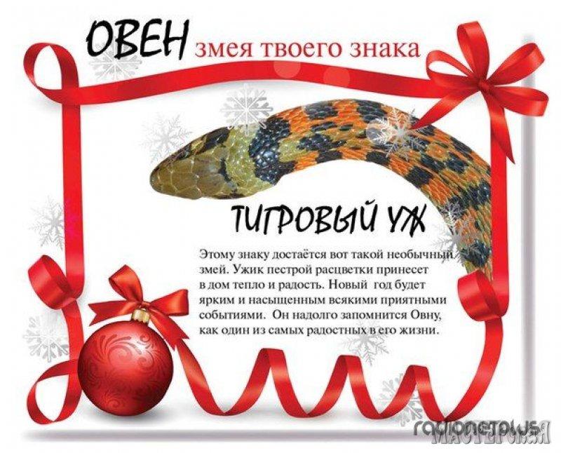 Какой тип змеи относится к вашему знаку зодиака и что ждет вас в новом