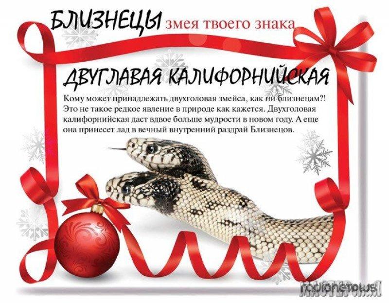 Метки. змея. полезная информация. Новый год. гороскоп.